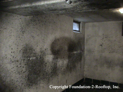 Mold Houses In Omaha Found By Greg Wayman Ashi Certified